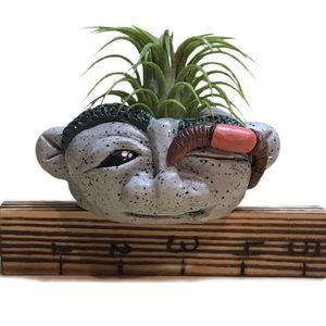Air plant holder,rock troll with plant